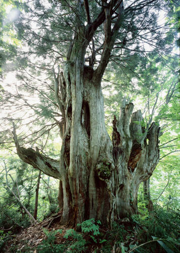 Нетронутая природа в работах Такаси Амано (Takashi Amano) 19