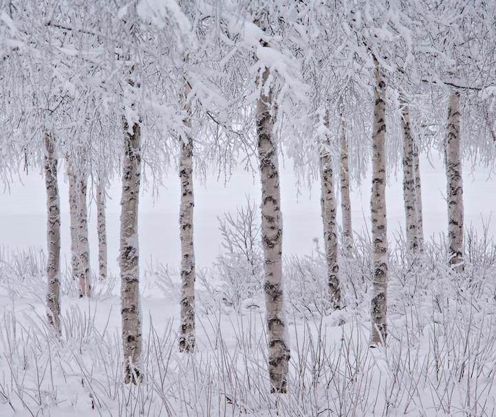 """Лучшая фотография в номинации """"Снег и лед"""": Джон Мартин"""