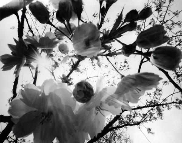 Японский фотограф - Таку Арамаса (Taku Aramasa) 23