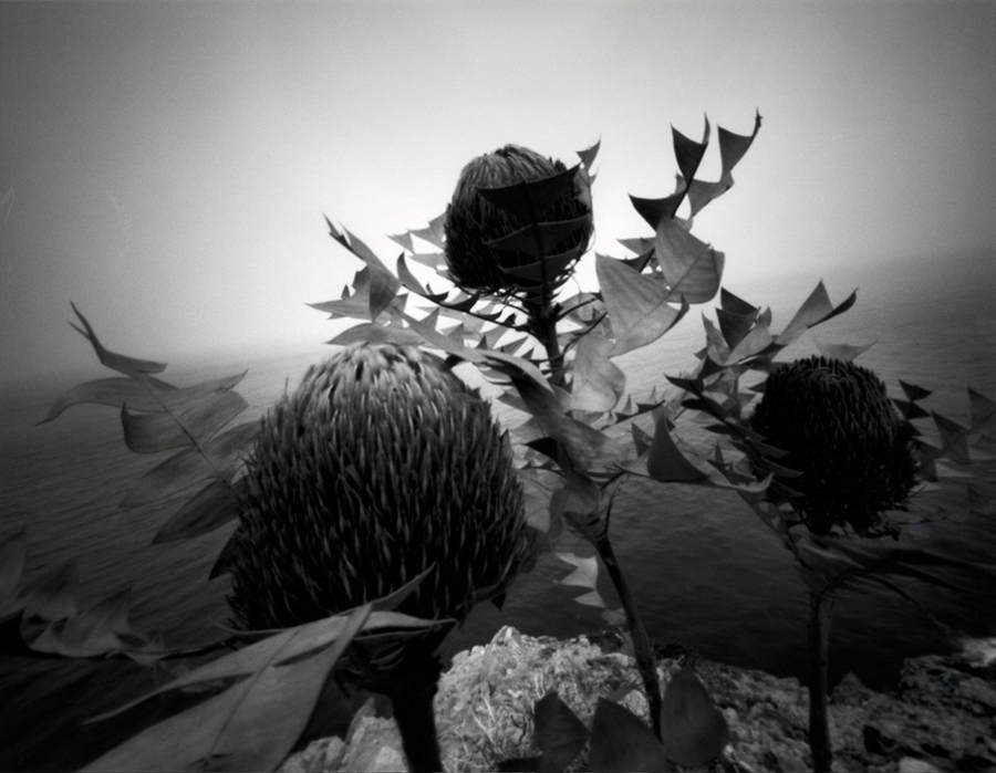 Японский фотограф - Таку Арамаса (Taku Aramasa) 5