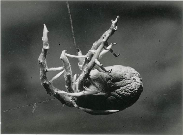 Брассай (Brassaï) и его фотографии 28