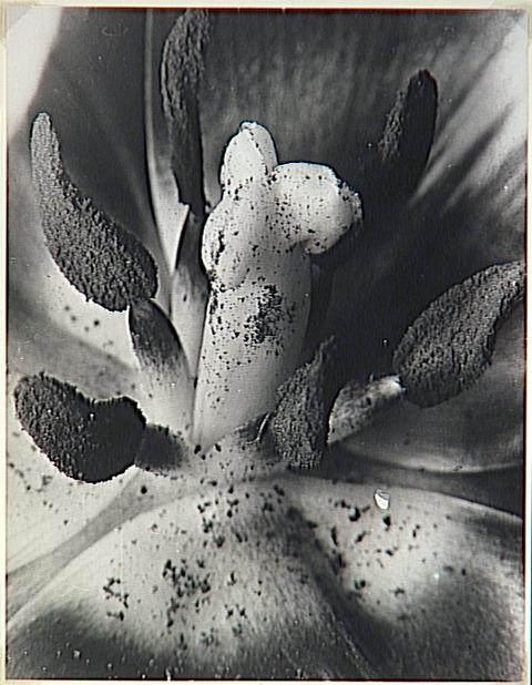 Брассай (Brassaï) и его фотографии 27