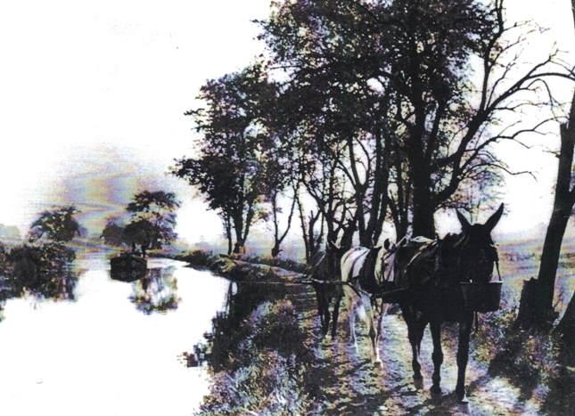 Американский фотограф начала 20-го века Уильям А. Барнхилл (William A. Barnhill) 8