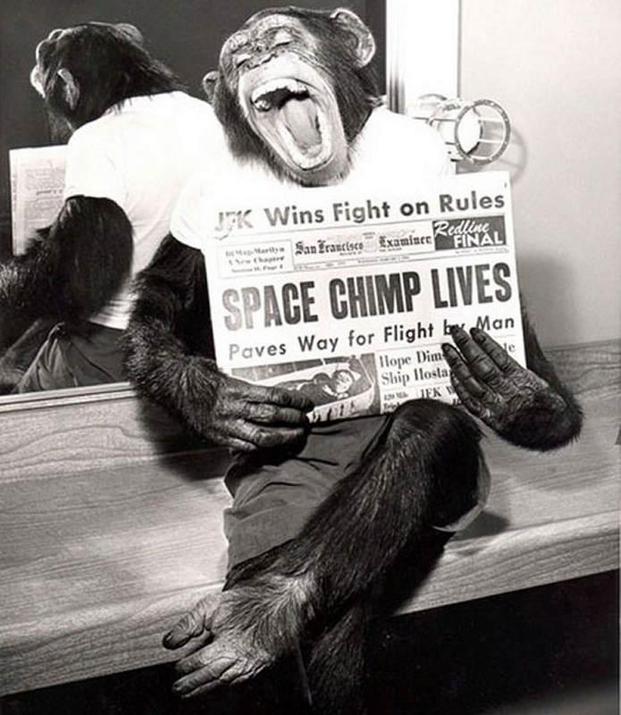 История в фотографиях (1961-1962) Фотография Хэма, после успешного полета в космос, 1961 год