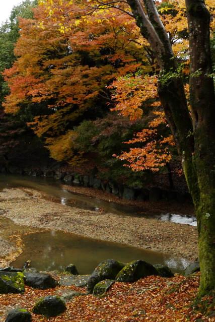 Японский фотограф Таикичи Ири (Taikichi Irie) 23
