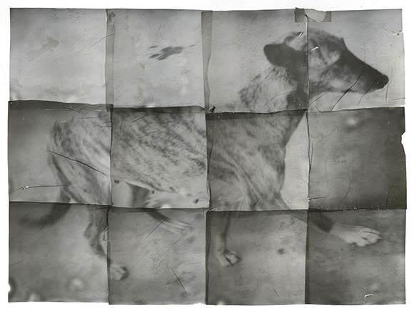 Современный китайский фотограф Чжан Сяо (Zhang Xiao) 16