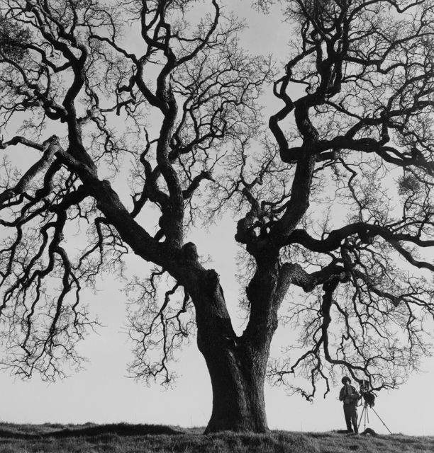 Американский фотограф документалист Паркл Джонс (Pirkle Jones) 20