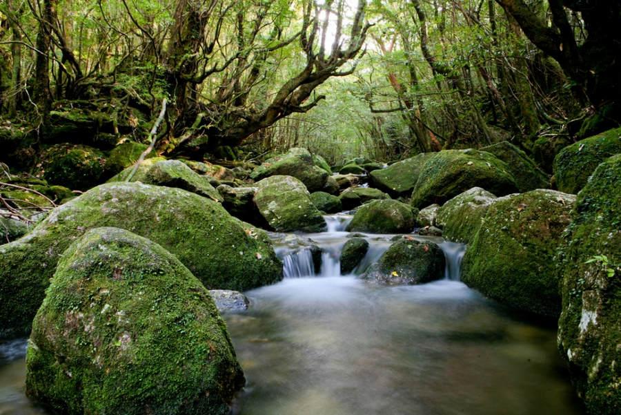 Леса Тасмании. 15 мест, которые нужно посетить, прежде чем они исчезнут