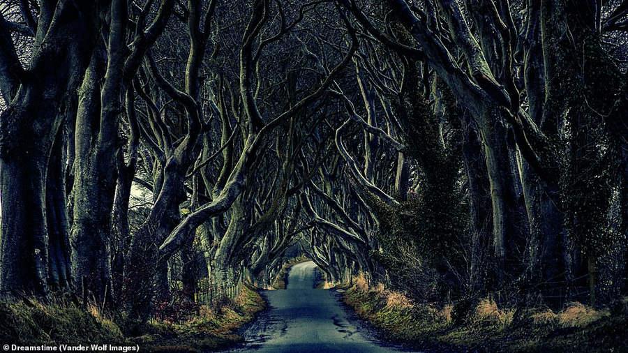 Буковые деревья Грейсхилл-Хаус в графстве Антрим
