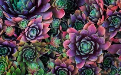 Фотосъемка растений . Советы