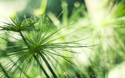 Фотоконкурс в зеленых тонах