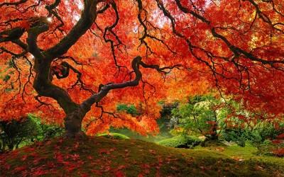 Осенняя фотосессия — идеи способные вас вдохновить