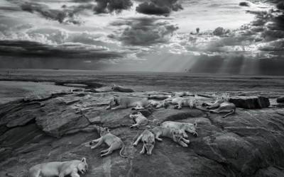 Победители фотоконкурса Wildlife Photographer of the Year 2014