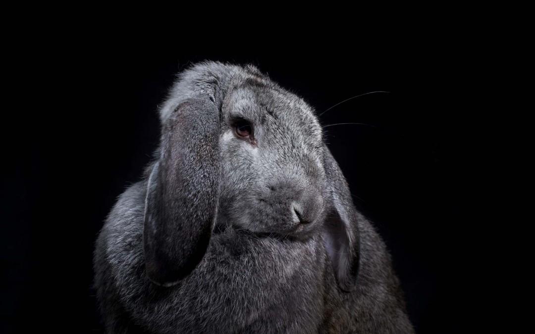 Портреты животных от Vincent J Musi